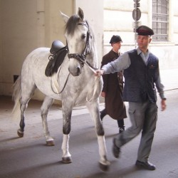 Lipizzan horse from the Spanish Riding School<small>© Wikimedia Commons / GNU Free Documentation License Version 1.2)]</small>