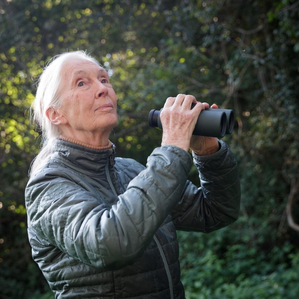 Jane Goodall in Vienna<small>© Österreichische Präsidentschaftskanzlei / Peter Lechner/HBF</small>