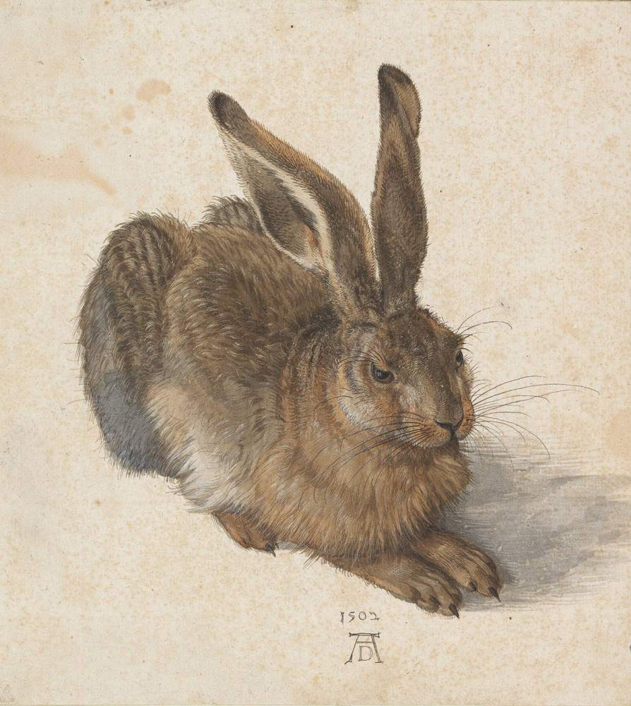 Albrecht Dürer: Feldhase, 1502<small>© Albertina, Vienna</small>