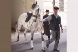 A Lippizaner horse being led out of the Spanish Riding School, Vienna.<small>© Wikimedia Commons / GNU Free Documentation License. [GFDL (https://commons.wikimedia.org/ wiki/Commons: GNU_Free_Documentation_License,_version_1.2)]</small>