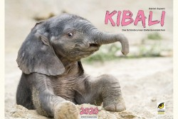 The elephant baby's name is Kibali, she's female and she's a calendar star.<small>© Tiergarten Schönbrunn / Daniel Zupanc</small>